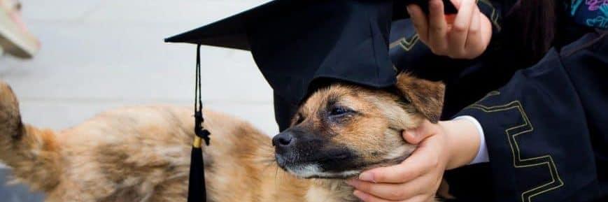 scherzi e giochi per laurea: anche il cane si laurea