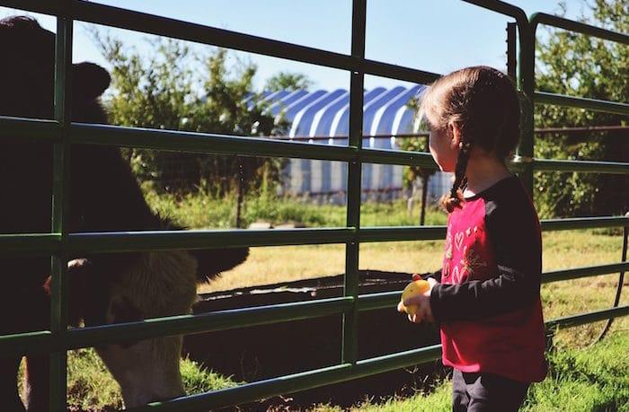 Fattorie didattiche: eventi Green per famiglie! Adulti e bambini